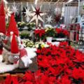 これぞ北欧文化!クリスマスのスウェーデンとデンマーク生中継|小学生オンラインスクール